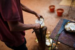 Opening green fresh coconut with big knife Stock Images