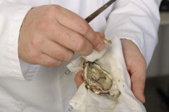 Opening the hollow and flat oysters Royalty Free Stock Images