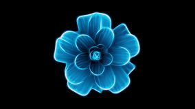 Opening long blooming blue flower time-lapse 3d animation isolated on background new quality beautiful holiday natural. Opening long blooming flower time-lapse stock video