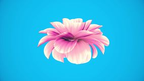 Opening long blooming purple flower time-lapse 3d animation isolated on chroma key green screen background new quality. Opening long blooming flower time-lapse stock video