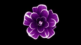 Opening long blooming purple flower time-lapse 3d animation isolated on background new quality beautiful holiday natural. Opening long blooming flower time-lapse stock footage