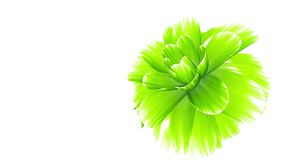 Opening long blooming green flower time-lapse 3d animation isolated on background new quality beautiful holiday natural. Opening long blooming flower time-lapse stock footage