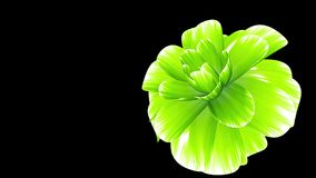 Opening long blooming greeen flower time-lapse 3d animation isolated on background new quality beautiful holiday natural. Opening long blooming flower time-lapse stock video