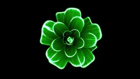 Opening long blooming green flower time-lapse 3d animation isolated on background new quality beautiful holiday natural. Opening long blooming flower time-lapse stock video footage