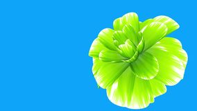 Opening long blooming green flower time-lapse 3d animation isolated on chroma key green screen background new quality. Opening long blooming flower time-lapse 3d stock video