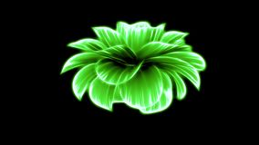 Opening long blooming green neon flower time-lapse 3d animation isolated on background new quality beautiful holiday. Opening long blooming flower time-lapse 3d stock footage