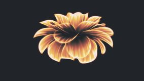 Opening long blooming orange neon flower time-lapse 3d animation isolated on background new quality beautiful holiday. Opening long blooming flower time-lapse 3d stock footage