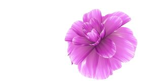 Opening long blooming pink flower time-lapse 3d animation isolated on background new quality beautiful holiday natural. Opening long blooming flower time-lapse stock video footage