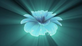 Opening long blooming shiny light blue purple flower time-lapse 3d animation isolated on background new quality. Opening long blooming flower time-lapse 3d stock video