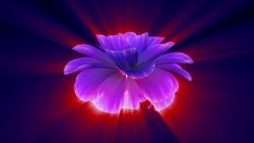 Opening long blooming shiny light blue purple flower time-lapse 3d animation isolated on background new quality. Opening long blooming flower time-lapse 3d stock footage