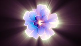Opening long blooming shiny light blue purple flower time-lapse 3d animation isolated on background new quality. Opening long blooming flower time-lapse 3d stock video footage