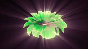 Opening long blooming shiny light green flower time-lapse 3d animation isolated on background new quality beautiful. Opening long blooming flower time-lapse 3d stock video footage