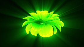 Opening long blooming shiny light green flower time-lapse 3d animation isolated on background new quality beautiful. Opening long blooming flower time-lapse 3d stock footage