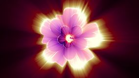 Opening long blooming shiny light pink flower time-lapse 3d animation isolated on background new quality beautiful. Opening long blooming flower time-lapse 3d stock video
