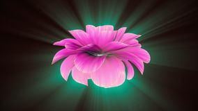 Opening long blooming shiny light pink purple flower time-lapse 3d animation isolated on background new quality. Opening long blooming flower time-lapse 3d stock video