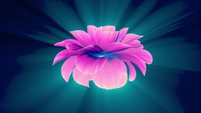 Opening long blooming shiny light pink purple flower time-lapse 3d animation isolated on background new quality. Opening long blooming flower time-lapse 3d stock video footage