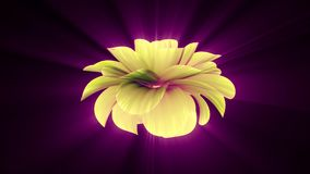 Opening long blooming shiny light yellow flower time-lapse 3d animation isolated on background new quality beautiful. Opening long blooming flower time-lapse 3d stock footage