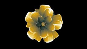 Opening long blooming yellow flower time-lapse 3d animation isolated on background new quality beautiful holiday natural. Opening long blooming flower time-lapse stock video