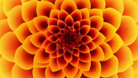 Opening Of The Yellow Flower. Looped. 3D Animation stock footage