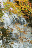 Openings in colorful fall foliage reveal Cloudland Falls, New Ha Royalty Free Stock Images