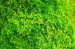 In openlucht groen mos Stock Afbeeldingen