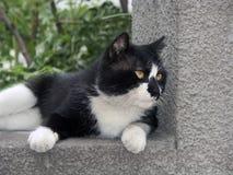 Openlucht kat. Royalty-vrije Stock Afbeelding