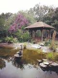 Openlucht natuurlijke schoonheid royalty-vrije stock fotografie