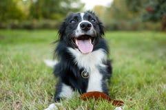 In openlucht portret die van grote hond op grond met tong het hangen uit tijdens hete de zomerdag liggen Stock Fotografie