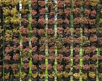 Openlucht verticale tuin Royalty-vrije Stock Afbeeldingen