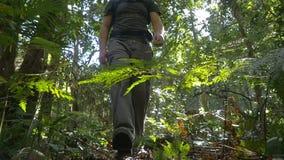 Openluchtavonturenwandelaar die met rugzak wildernisaard onderzoeken stock footage