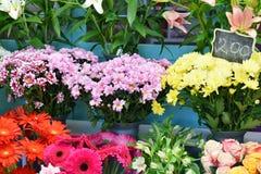 Openluchtbloemwinkel, rood, sinaasappel, yelow en purpere bloemen Royalty-vrije Stock Afbeeldingen
