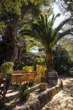 Openluchtkoffie met grote palm Stock Afbeelding