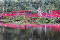 Openluchtsc van Hellingsazalea garden water reflection stock foto
