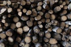 Opent een bos het programma Stock Foto