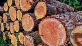 Opent het bos het programma Stock Foto