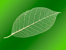 Openwork leaf. Royalty Free Stock Photography