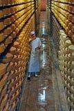 Operário do queijo do Gruyère em uma adega em uma adega Fotografia de Stock Royalty Free