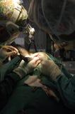 Operação veterinária do cérebro Fotografia de Stock Royalty Free