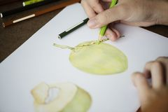 Opera d'arte del disegno della mano del primo piano della noce di cocco Fotografie Stock Libere da Diritti