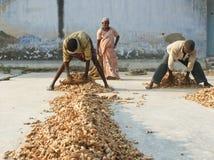 Operai al mercato della spezia a Cochin, India Immagini Stock Libere da Diritti