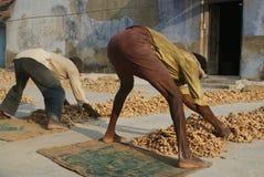 Operai al mercato della spezia a Cochin, Kerala, Ind Immagine Stock Libera da Diritti
