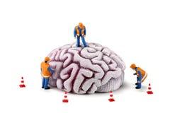 Operai di costruzione sul cervello Fotografie Stock Libere da Diritti