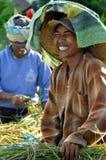 Operai in riso della raccolta immagine stock