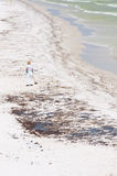Operaio dell'olio sulla spiaggia di Penacola Immagini Stock Libere da Diritti