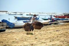 Operaio indonesiano alla raccolta delle alghe fotografie stock libere da diritti