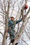 Operaio in un albero con la sega a catena Immagini Stock