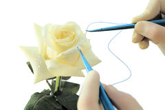 Operating with white Rose Royalty Free Stock Photos