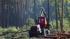 The operation of the machine for cutting wood, harvesting lumber for production
