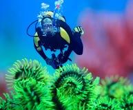 Operatore subacqueo fotografie stock libere da diritti