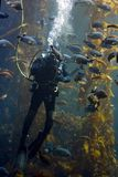 Operatore subacqueo Fotografie Stock